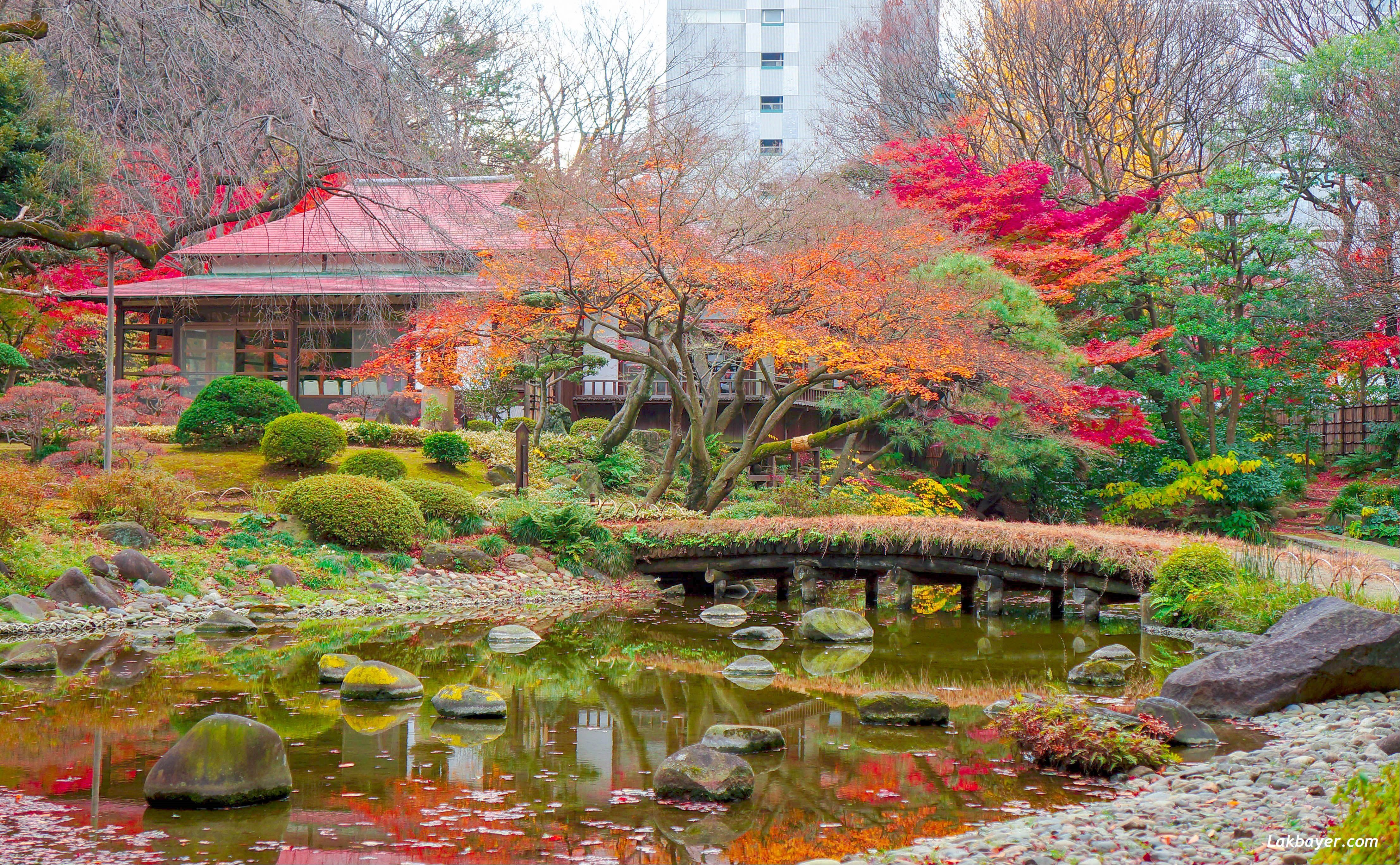 גן יפני6